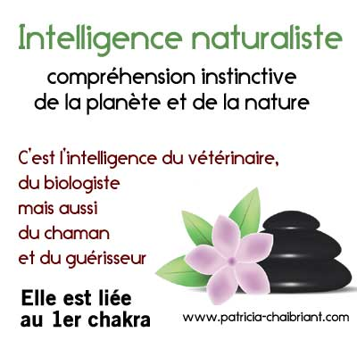 intelligences multiples, définition de l'intelligence naturaliste liée au 1er chakra