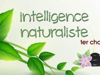 Découvrez ce qu'est l'intelligence naturaliste